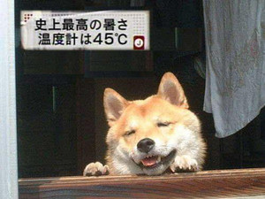Atsui